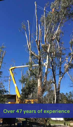 Over 47 years of expernce with tree trimming and tree removal in Murrieta