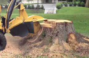 Murrieta Stump Grinding Service