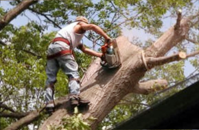 Murrieta Tree Trimming Services